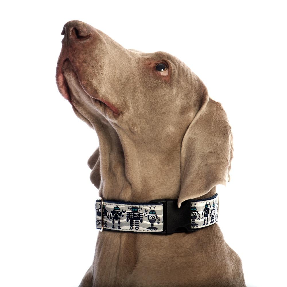 dog wearing robot pattern collar