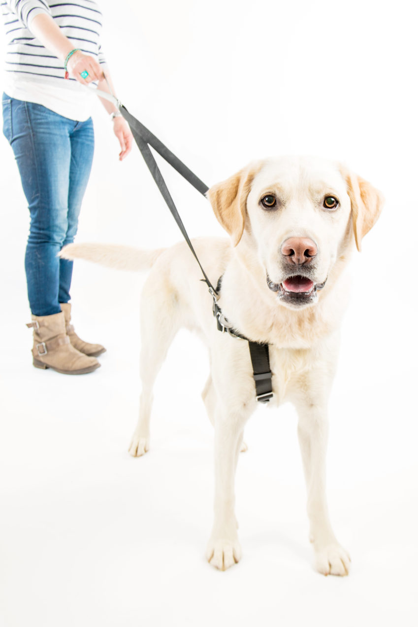 why do dogs pull?