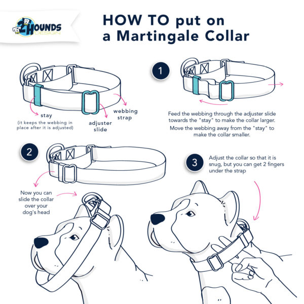 How to put on a martingale collar